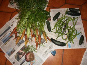 2013.08.17_carrots_beans_cucumbers_SDC10005