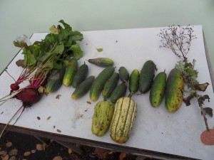 2013.10.24_cucumbers_beetroots_gourds_SDC10037